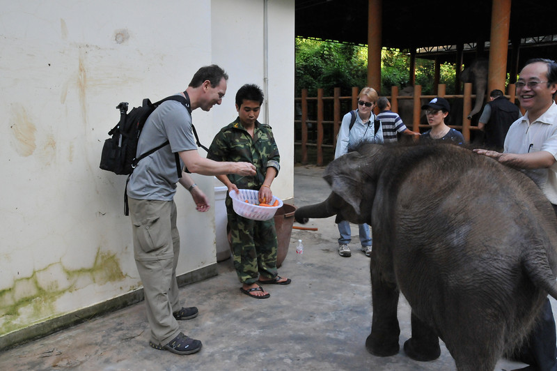 In Xishuangbanna, Yunan Province, China feeding an orphaned elephant, May 2009