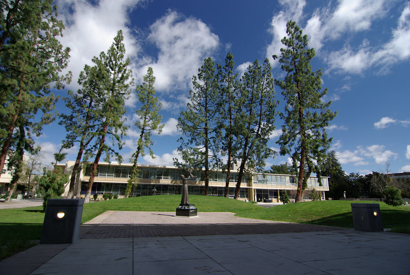 The trees near the Library