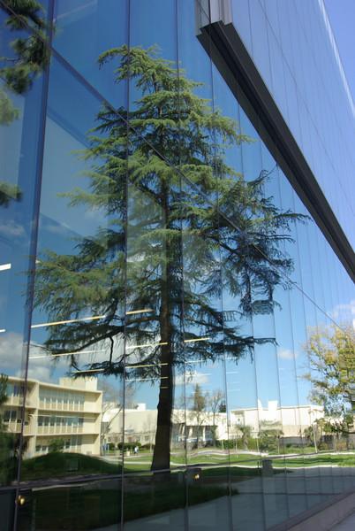 The Tree Mirrored