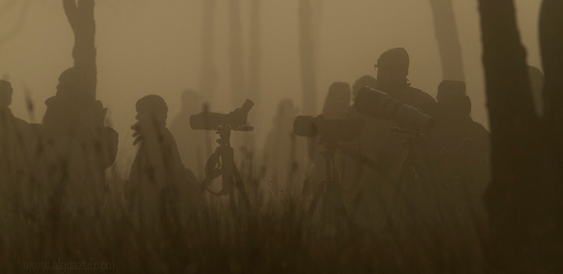 Ambush (original color)<br /> Waiting for the geese in Doñana National Park