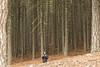 Bosque en Sierra de Segura