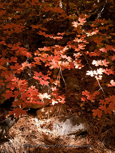 Fall colors at Smith Springs - Guadalupe Mountains National Park, Texas