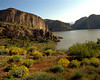 desert flowers rock lake and sky