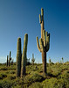 cactus family with twins and kid on shoulders
