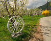 Cashmere white wagonwheel and apple blossoms