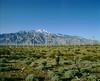 Sierra Nevada Windmill Farm