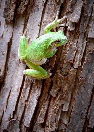 Frog Photos - Sept 2016
