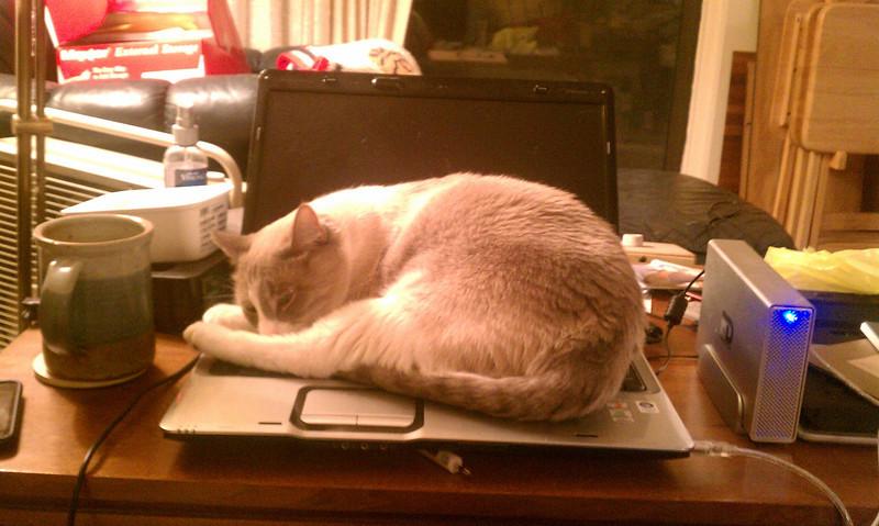 computer occupied