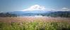 Flowers & Mt. Adams