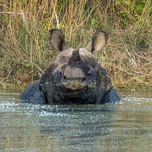 Rhino On Alert