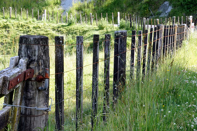 Sheep Border (Fence post design on one of the high points along the Forgotten World Highway)