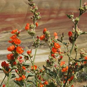 Orange Bouquet & Ladybug