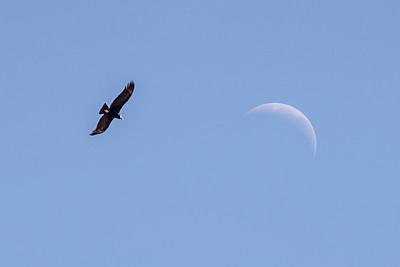 Condor & Moon