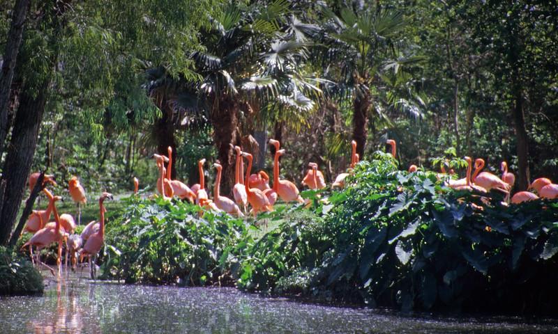 Big Easy Flamingos