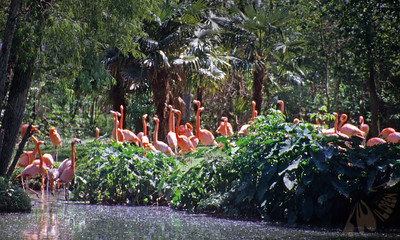 Big Easy Flamingos