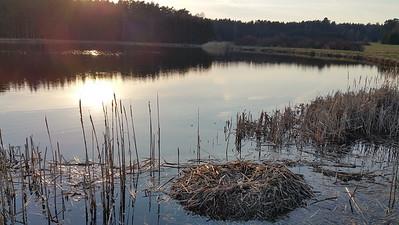 Fischweiher Taxöldern Abendsonne; Rad-ausflug