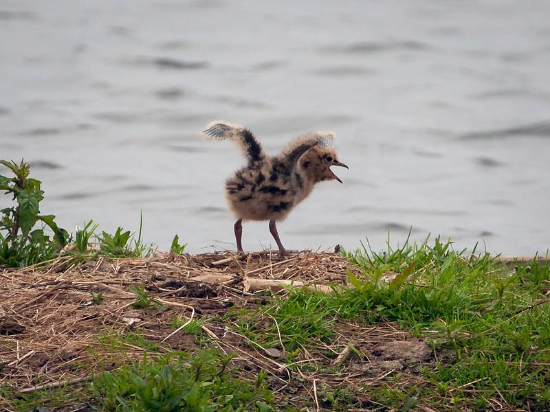Se på meg, Mamma - nå er jeg klar til å fly!