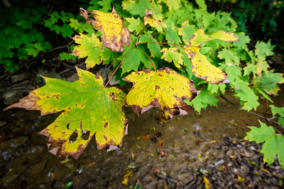 With 10-24mm - Focus is on leaf in the middle of the photo