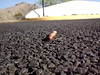 ATTACK OF THE GIANT MILLIPEDE<br /> Here's a fun little video I did one day a few years back. Steven Spielberg, eat your heart out!