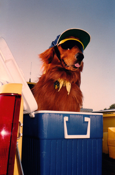 SCOOTER<br /> Mesquite Balloon Festival, Mesquite, Texas - 1989<br /> <br /> Now this is one cool pooch, not only in looks but in temperature. This dog is nobody's fool, as it must be 100º out here.