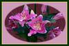 Jeanne's Flowers