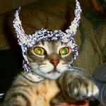 00tinfoilcat