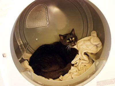 cat dryer