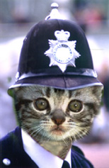 officer%20kitty