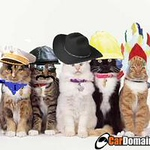 000cats