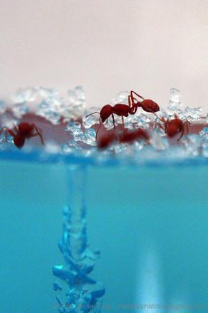 GESO - Ant Farm Study
