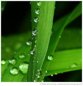GESO - Rain on Tulip Leaves