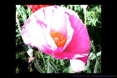 GESO - Roadside Flowers
