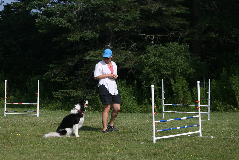 Ground School Level 2 - Once you've mastered flatwork learn to execute the specific skill on equipment. 1-Jump and Double Box techniques will be used primarily.