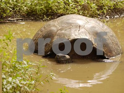Galapagos Scenic & Natural History