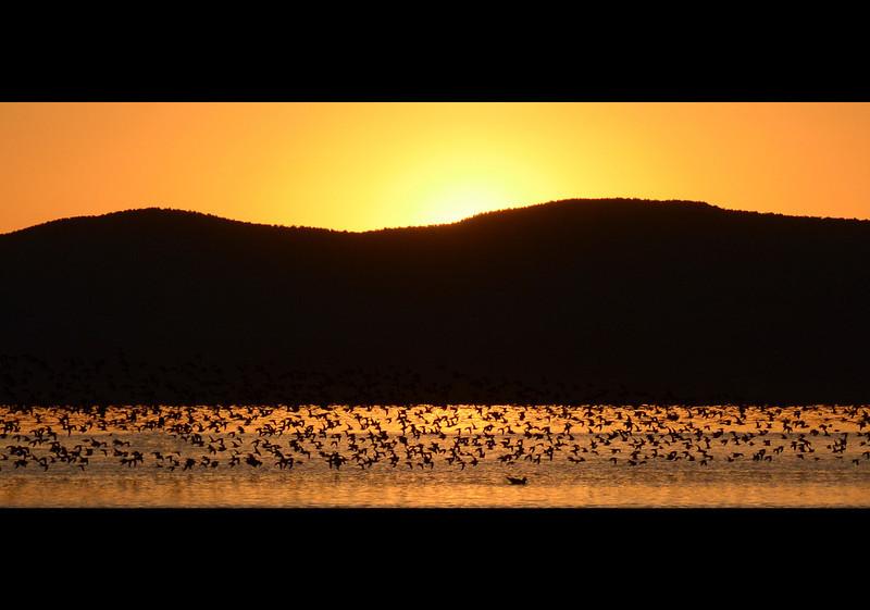 Birds In Flight, Mono Lake