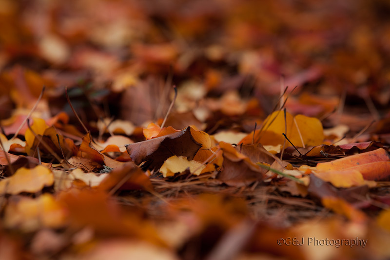 Fall leaves and pine needles