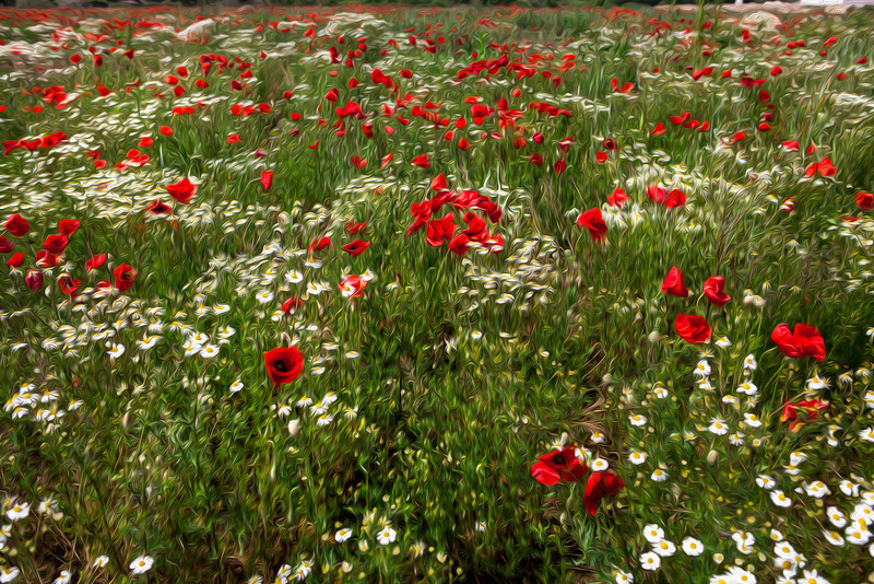 Wildflowers and poppies