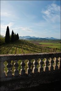 Castagna_vineyard