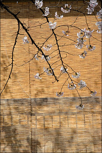 Blossoms on Blinds