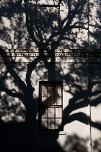 Castagna_TreeShadow