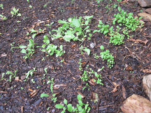 Garden 20110515