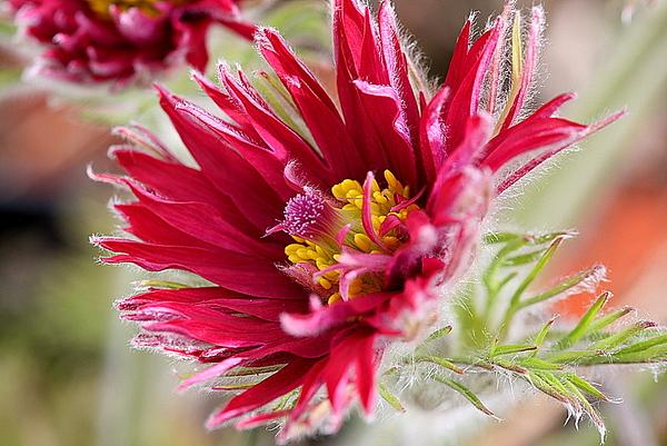 Garden Shrubs & Flowers