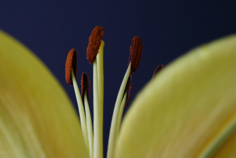 Yellow Flower_0713