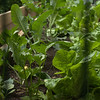 Celery-scape.