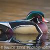 Wood Duck drake - King's Pond, Victoria, February 2013