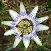 Flower 1 Aug 07