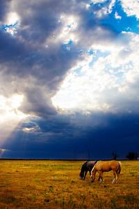 Horses graze as a thunderhead builds behind them in eastern Colorado.