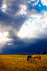 Horses graze as a thunderhead builds behind them in eastern Colorado.