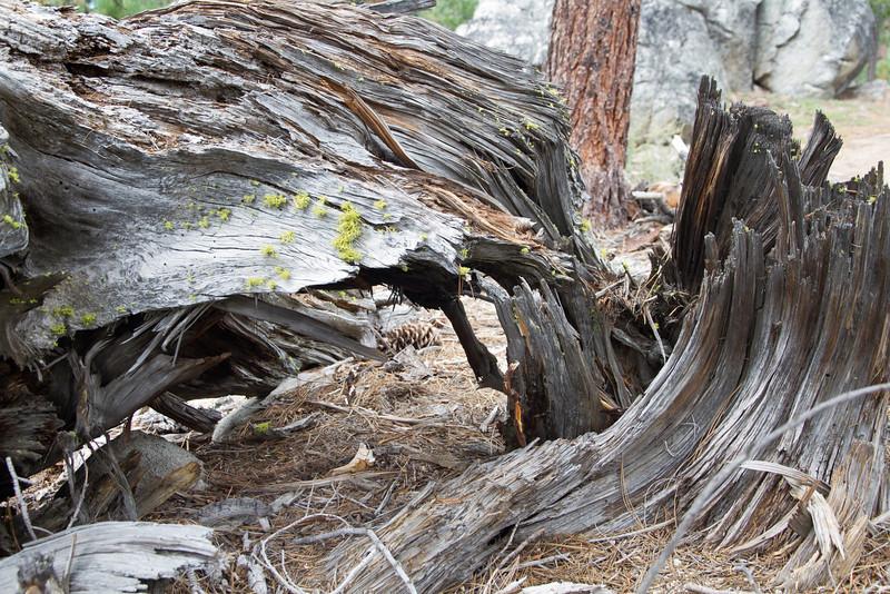 Van Sickle Bi-State Park, South Lake Tahoe