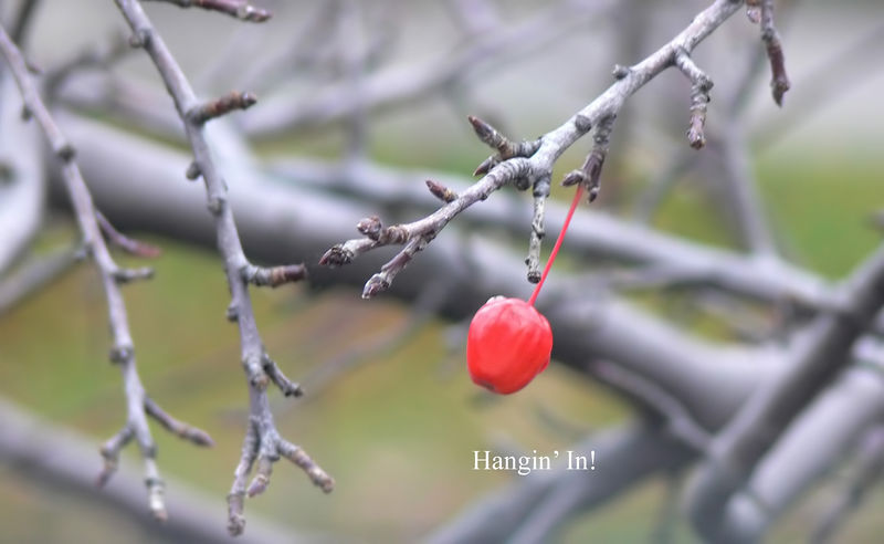 The last crab-apple of summer.